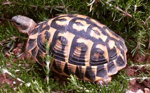 Schildkröte - für ein langes Leben